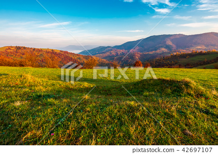 grassy meadow on hill side at sunrise in autumn 42697107