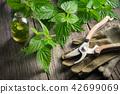 Nettle, infusion bottle, gloves and garden pruner. 42699069