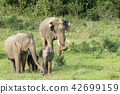 Asian elephants is eating solid in Thailand forest 42699159