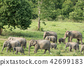 Asian elephants is eating solid in Thailand forest 42699183