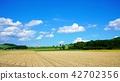 여름 밭 농사 풍경 16 : 9 42702356