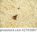 벌레를 가지고 가려고하는 개미 42703887