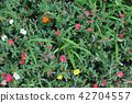 A flower 42704557