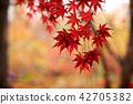 가을 단풍잎 42705382