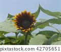 การพูดของดอกไม้ฤดูร้อนดอกทานตะวันสีเหลือง 42705651