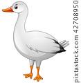 Cute white goose cartoon 42708950