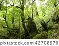 Yakushima Shiratani Cloud Water Gorge Yakushima Shiratani Cloud Water Gorge 42708970