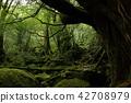 야쿠시마 시라 타니 운수 계곡 야쿠시마 시라 타니 운수 계곡 42708979