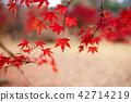 현충사의 가을과 단풍나무 42714219
