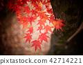 현충사의 가을과 단풍나무 42714221