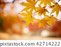 현충사의 가을과 단풍나무 42714222