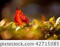 가을햇살과 낙엽 42715085
