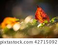 가을햇살과 낙엽 42715092