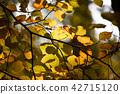 가을 오후 햇살과 나뭇잎 42715120