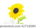 sunflower 42716084