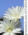 bloom blossom blossoms 42718354