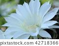 bloom blossom blossoms 42718366