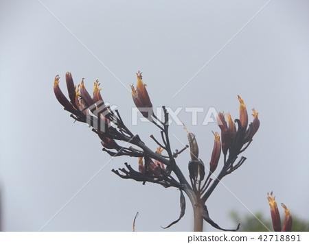 푸른 하늘에 뉴사이란 오렌지 꽃 42718891