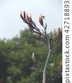 푸른 하늘에 뉴사이란 오렌지 꽃 42718893