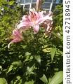 花朵 花 花卉 42718945