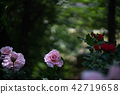 玫瑰玫瑰粉红玫瑰 42719658
