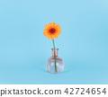 Orange daisy flower in a vase on trendy background. 42724654