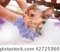 dog with Demodicosis, allergy dog skin 42725960