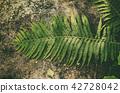 Fern leaf on the stone 42728042