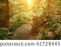 Summer green forest 42728445