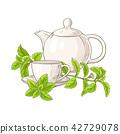 stevia, sweetleaf, herb 42729078