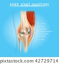 knee, joint, bone 42729714