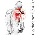 Shoulder painful skeleton x-ray, 3D illustration. 42730212