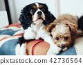 สุนัขสองตัวผ่อนคลายบนโซฟาของลวดลาย Union Union 42736564