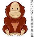 Orangutan Sit Illustration 42749778