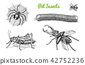 beetle, bug, insect 42752236