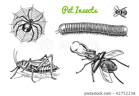 Big set of insects. Bugs Beetles Tattoo, Spider, Worm Centipede Locusts Bee. Lucanus cervus, Julida 42752236