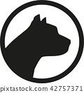 pitbull, dog, pet 42757371