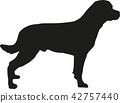 rottweiler, dog, pet 42757440