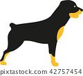 rottweiler, dog, pet 42757454