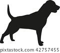 rottweiler, dog, pet 42757455