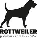 rottweiler, dog, pet 42757457