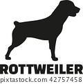 rottweiler, dog, pet 42757458