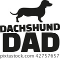 Dachshund dad 42757657