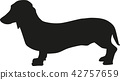 dachshund, dog, pet 42757659