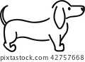 dachshund, dog, pet 42757668