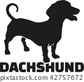 Dachshund with breed name 42757672