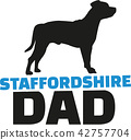 staffordshire, dog, pet 42757704