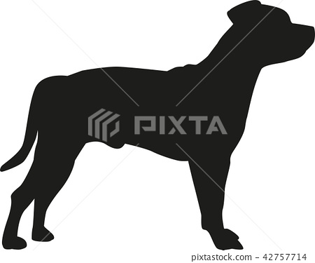 dog_staffordshire_real2.eps 42757714