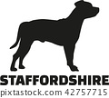 staffordshire, dog, pet 42757715
