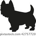梗犬 狗 狗狗 42757720